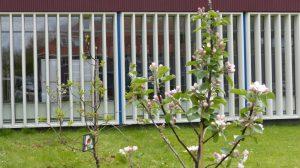 Bloeiende Heikracht appelboompjes